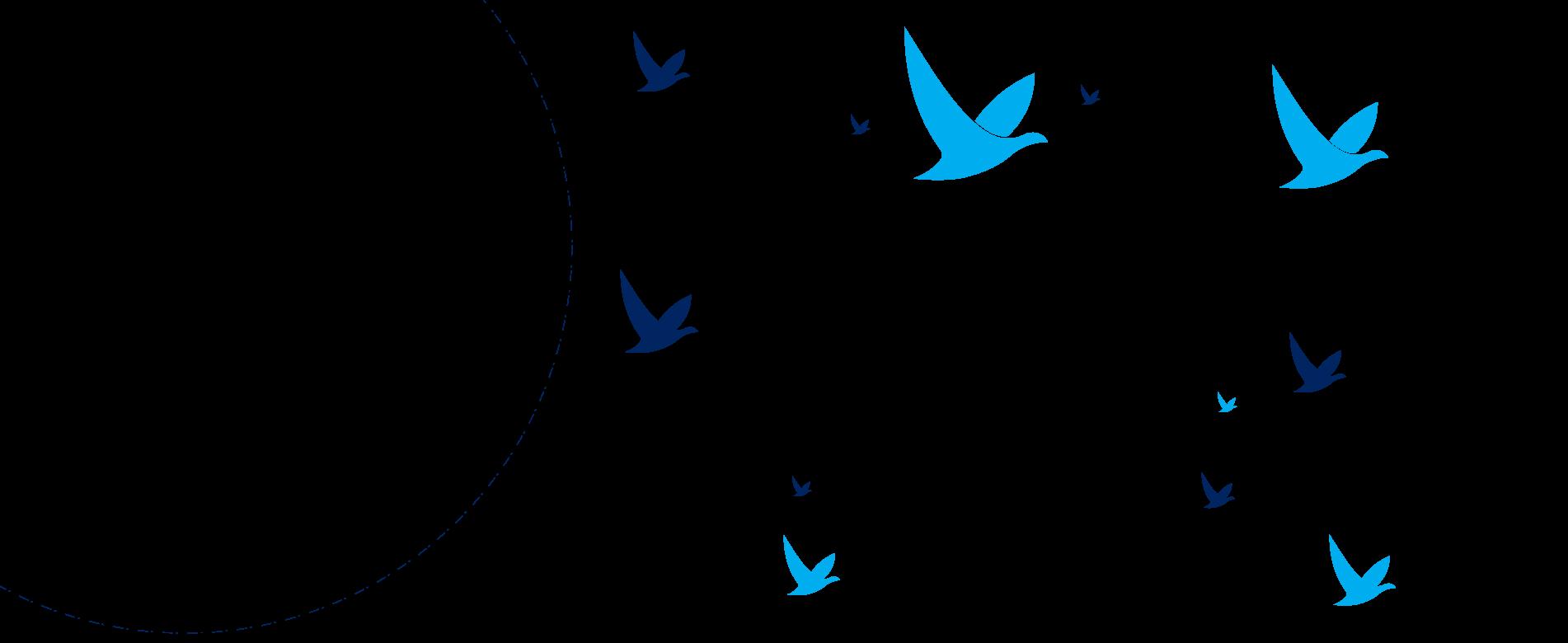 birds east