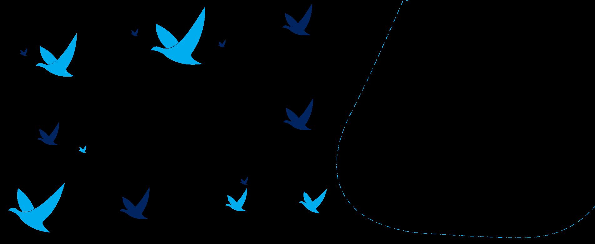 birds west
