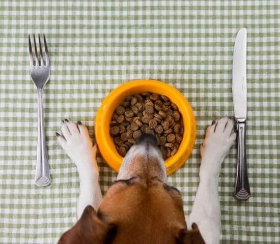 Pet diet food